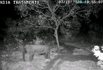 habitat camera