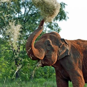 entrees for elephants, hay for a day