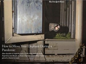 Mara in the New York Times