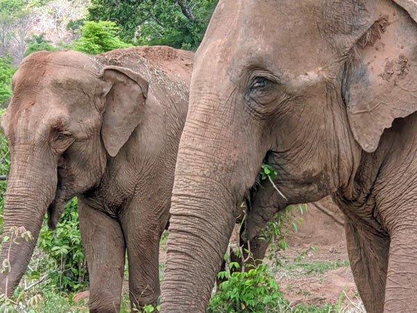 Rana and Mara