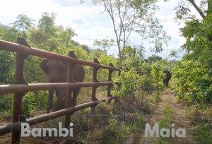 Bambi and Maia