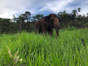 Maia grazing