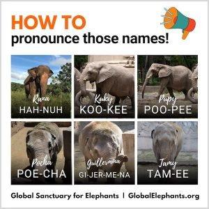 name pronunciations (1)
